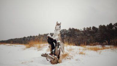 Comment ajouter de la neige dans Photoshop