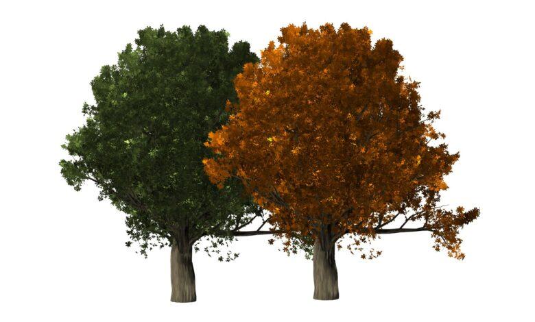 Comment faire des arbres dans Photoshop