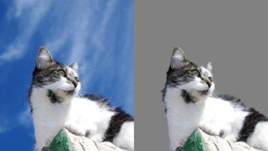 Comment utiliser l'outil Refine Edge dans Photoshop