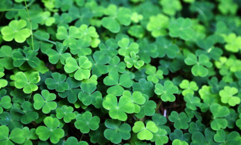 Découvrez les différentes couleurs de la Saint-Patrick