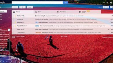 Thème du Gmail sur les tourbières de canneberges