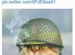 #BrusselsLockdown cat tweet
