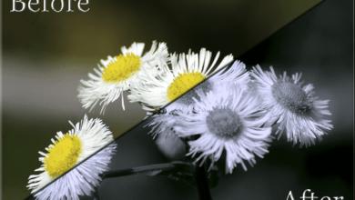 Split Tone et Duotone avec des éléments Photoshop