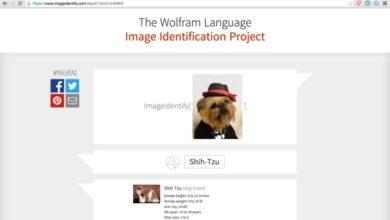 Capture d'écran du Wolfram Alpha Image Identification Project