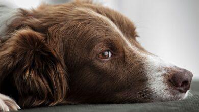 Comment fixer l'œil d'un animal de compagnie dans vos photos